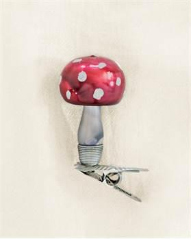 Pilz mit rundem Hut